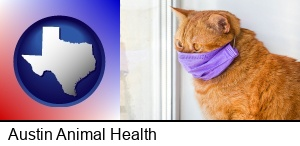 Austin, Texas - red cat wearing a purple medical mask